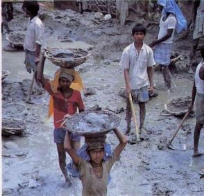 http://mesexos.free.fr/exerciseurs/TPinde-interactif-2002/doc/enfants_travail.jpg